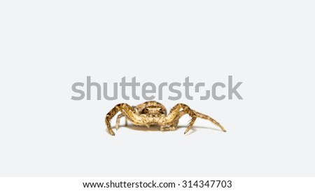 Spider 4 millimeters in size - stock photo