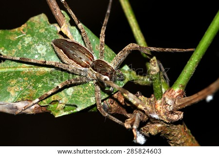 Spider on branch - stock photo