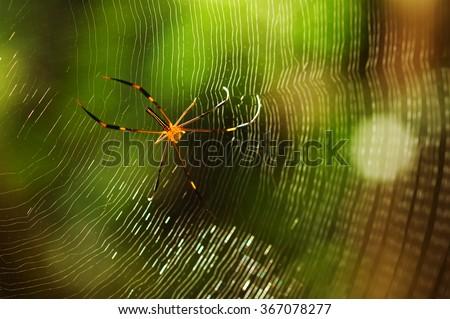 Spider on spiderweb. - stock photo