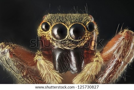 Spider portrait with 7X magnification and full depth of view. - stock photo