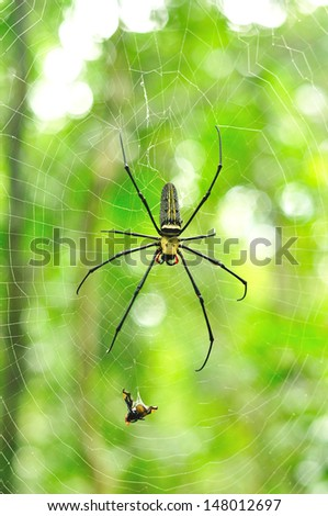Spider prey insect - stock photo