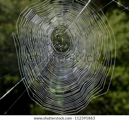 Spider undid their nets for a catch - stock photo