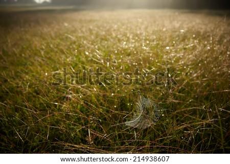 spider web  against sunrise  - stock photo
