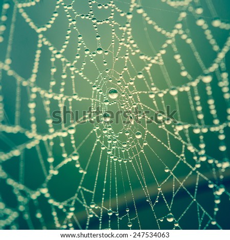 spider web background - stock photo