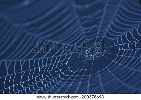 Spider Web close up in darkness - stock photo