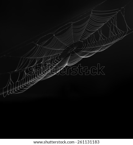 Spider Web On  Black Background - stock photo