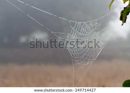 spider web or cobweb with water drops after rain - stock photo