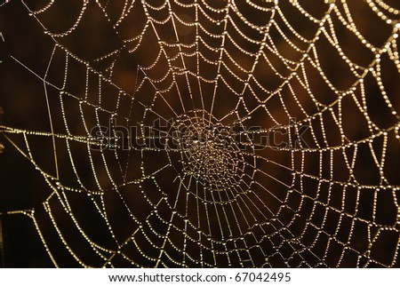 Spider Web With Dew Drops - stock photo