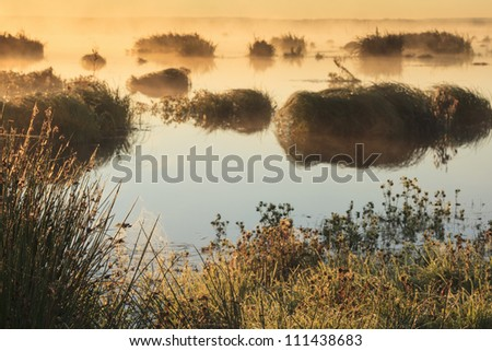 Spider web with dew in the morning light at the lake - stock photo