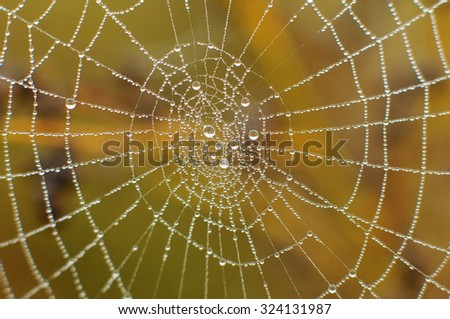 Spider web with water drops - stock photo