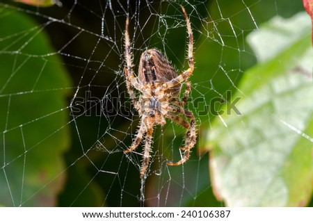 spider with cobweb on green leaf - stock photo