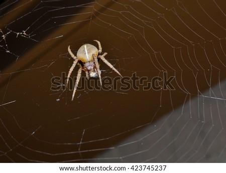 Spider with prey wrapped in his web - stock photo