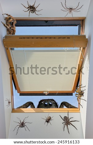 spiders crawling through an open window into the room - stock photo