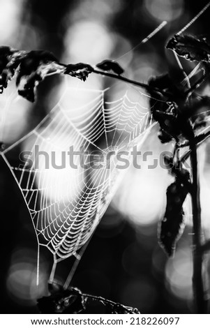 Spiderweb in forest in black and white - stock photo
