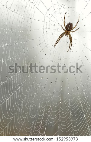 spiderweb in the morning  - stock photo
