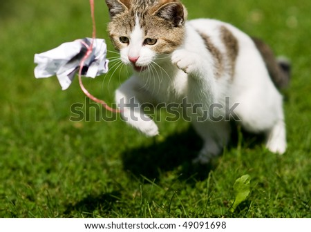 spielende Katze - stock photo