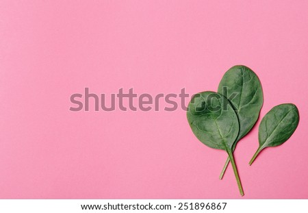 Spinach on a pink background - stock photo