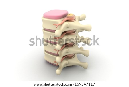 Spinal column with nerves and discs isolated on white background - stock photo