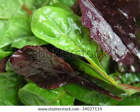 spinatsalat - stock photo