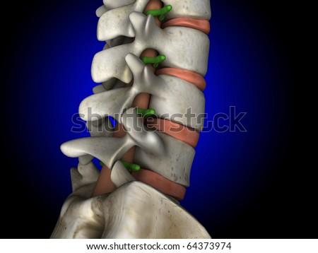 Spine, Spinal Cord and Nerves, Side View - stock photo