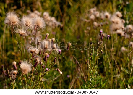 Spines and fuff on plants in green field in sunny day
