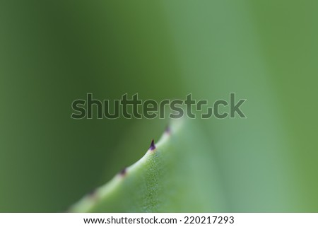 Spines of leaf - stock photo