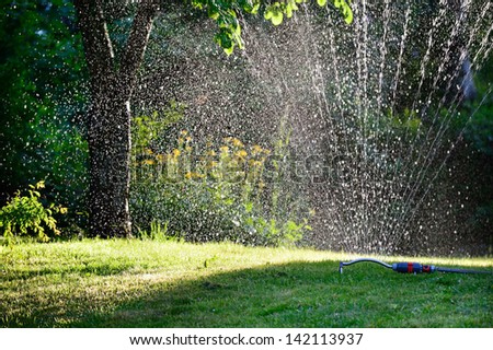 Spinkler in garden, sunset - stock photo