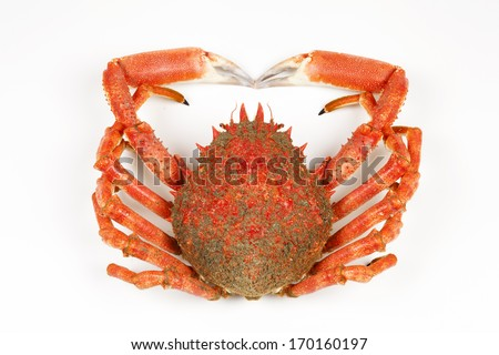 Spiny Spider Crab  - stock photo