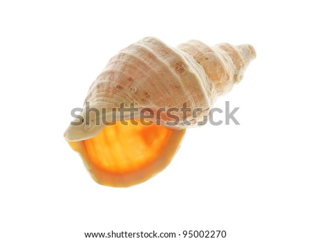 Spiral sea shell on white - stock photo