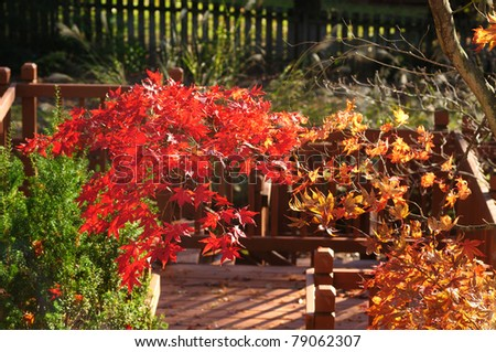 Splash of red and orange autumn colors over a wooden deck - stock photo