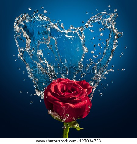 splashes of water and rose on a blue background - stock photo