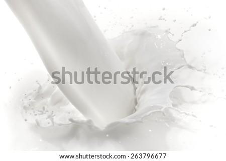 splashing milk on white background - stock photo