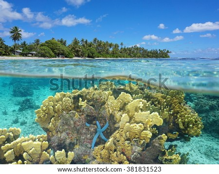 Split image over and under water surface in the lagoon near the shore of Huahine island with fire coral and a blue sea star underwater, Pacific ocean, French Polynesia - stock photo