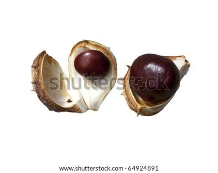 Split in half prickly fruit of the horse chestnut - stock photo