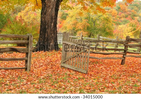 Split railed fence and open gate leading into a field with a maple tree and beautiful fall colors. - stock photo