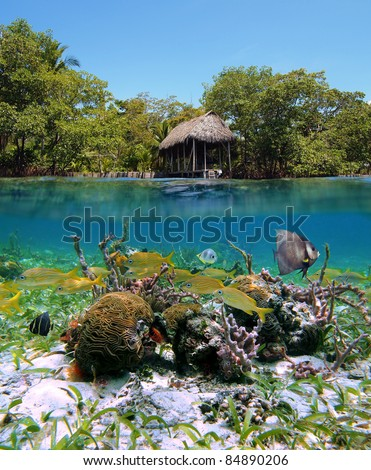 Split view of tropical coast with mangrove and a boathouse, underwater part with shoal of fish, corals and sea sponges, Caribbean sea, Panama - stock photo