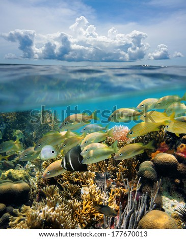 Split view of tropical underwater seabed with shoal of fish in a coral reef and above water surface, sky with cloud, Yucatan, Mexico - stock photo
