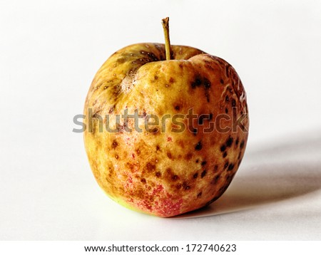 spoiled red yellow apple fruit on white. Bad food. - stock photo