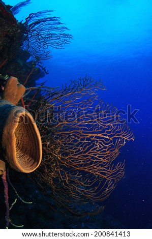 Sponges and Seafans on the wall, Grand Cayman - stock photo