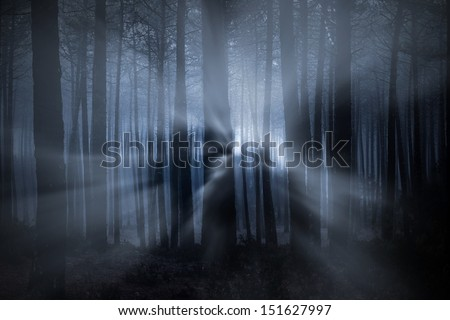 Spooky foggy forest at night with light beams - stock photo