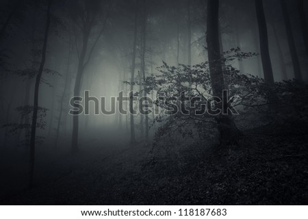 spooky forest landscape with huge tree - stock photo