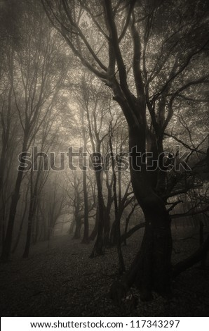 spooky forest with trees with twisted branches sepia - stock photo