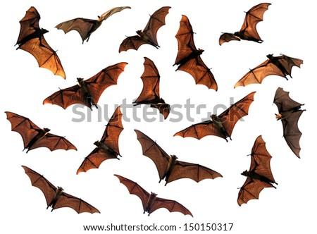 Spooky Halloween flying fox bats circling overhead composite image - stock photo