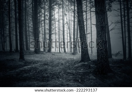 Spooky Night Forest with fog - stock photo