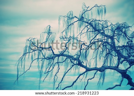 spooky tree branches on a green/blue tinted background - stock photo