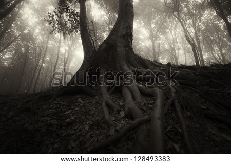 spooky tree with roots in dark forest at night - stock photo