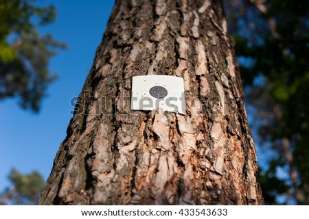 Sport shooting target with holes from bullets on tree in forest - stock photo