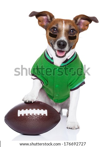 sporty rugby dog with a big sport ball - stock photo
