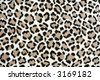 Spots of a Leopard - stock photo