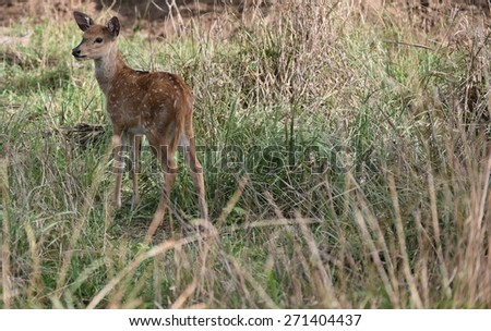 Spotted baby deer in group with other animals in natural forest setting - stock photo